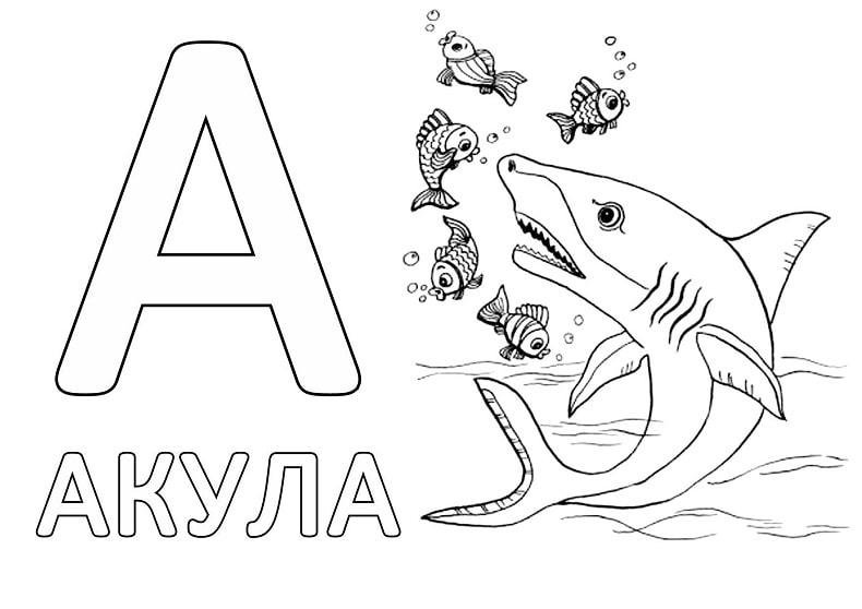 слова на букву А для детей в начале слова - акула