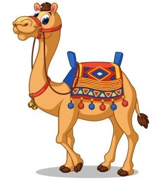 верблюд по английски произношение