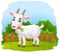 коза по английски произношение