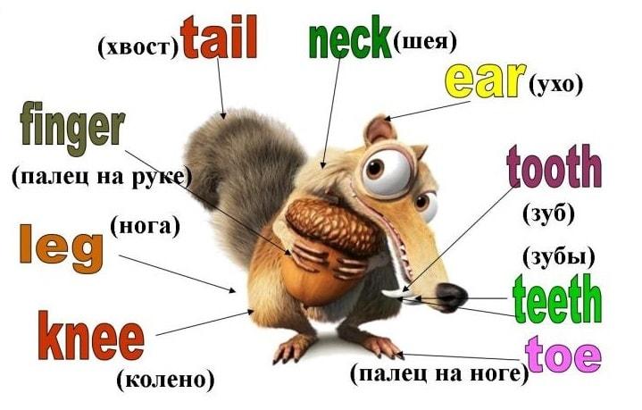 части тела на английском для детей