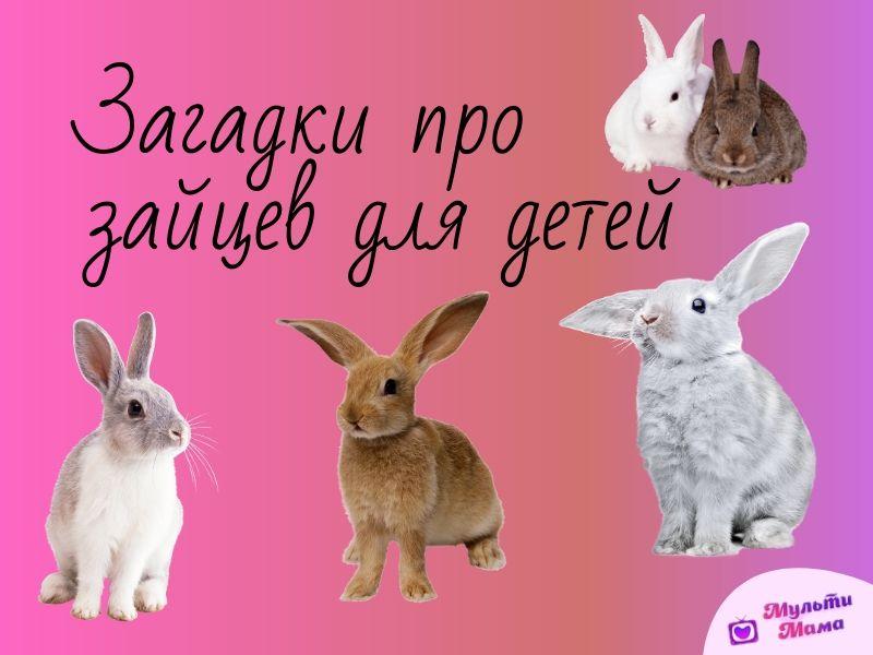 загадки про зайцев для детей