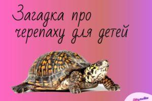 загадка про черепаху для детей