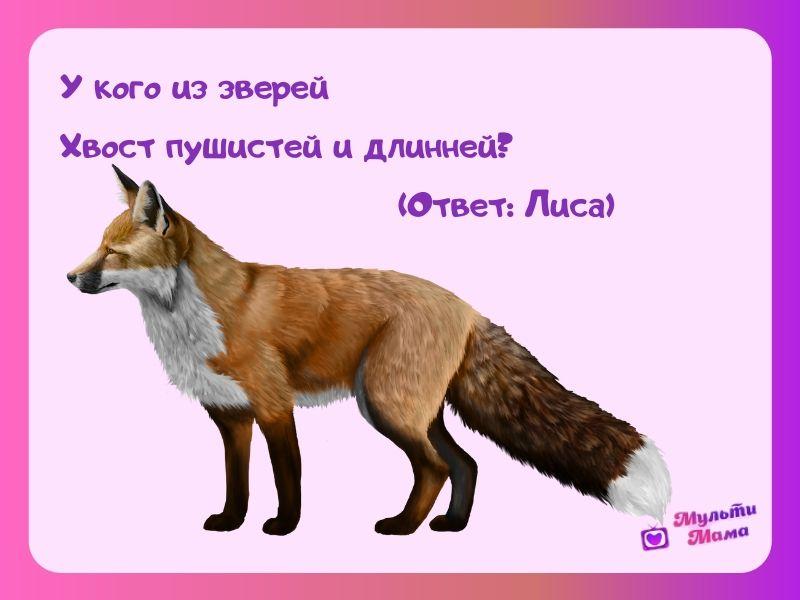 загадка про лису для детей