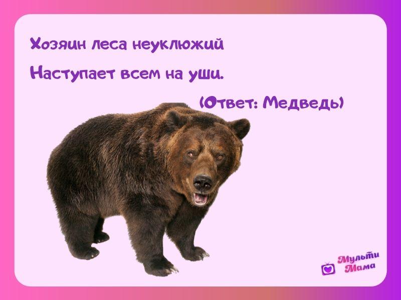 загадка про медведя для детей