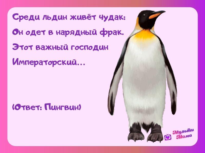 загадка про пингвина для детей