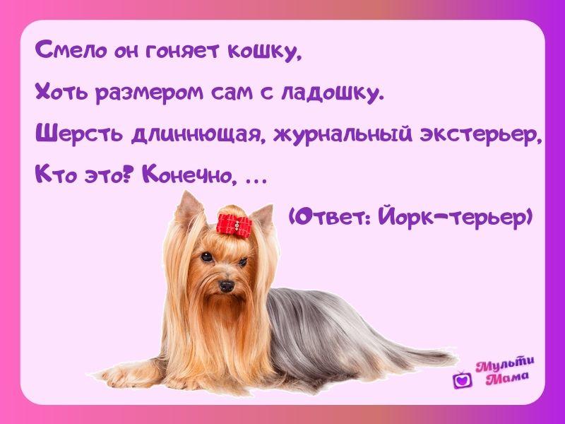 загадка про собаку для детей