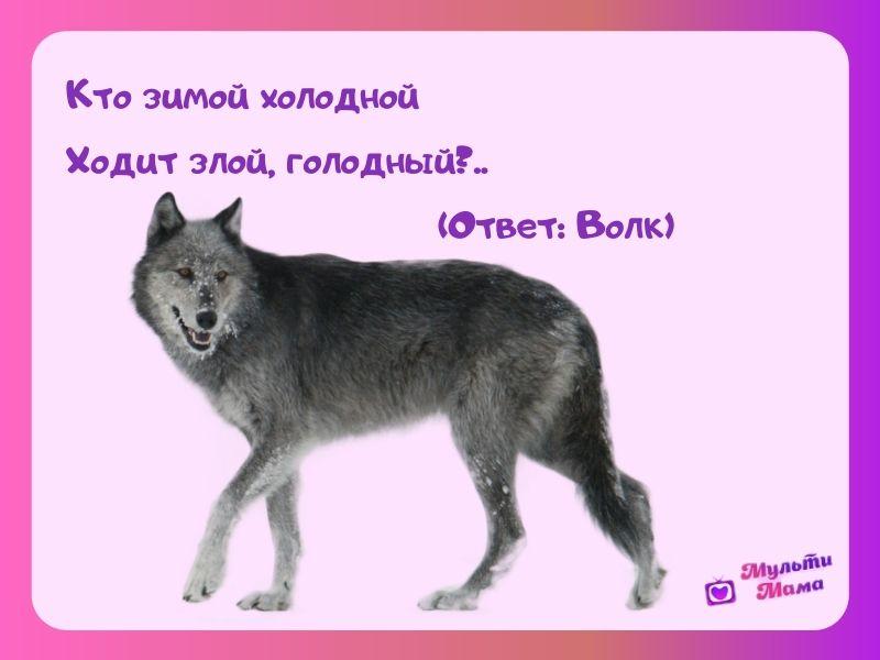 загадка про волка для детей