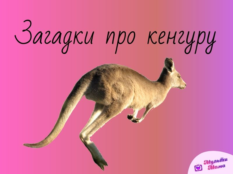 загадки про кенгуру