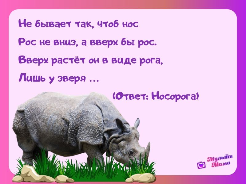 загадки про носорога