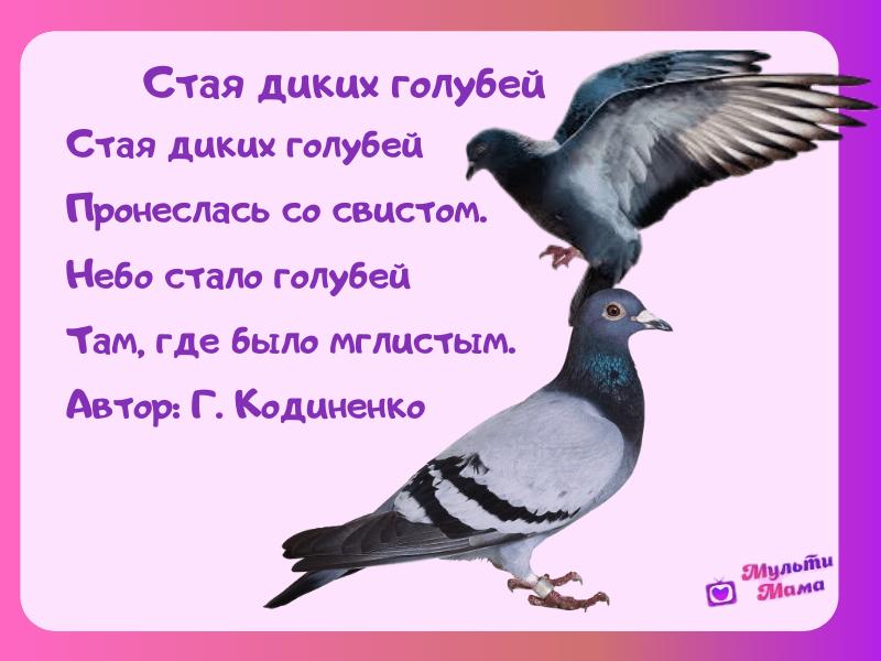 стихи про птиц для детей