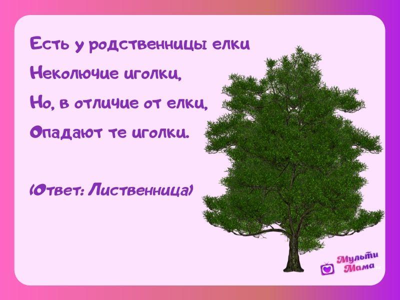 загадки про растения