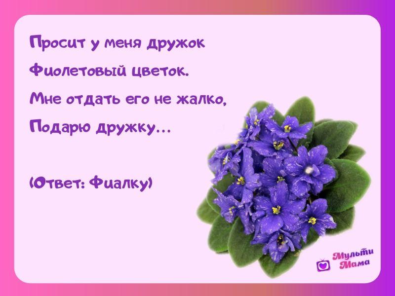 загадки про цветы